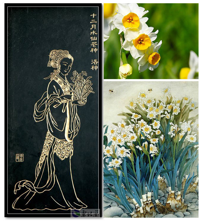 Chinese New Age. Flower Music. Богиня цветов. Daffodil (Er-Huang And Nu-Ying). Нарцисс.